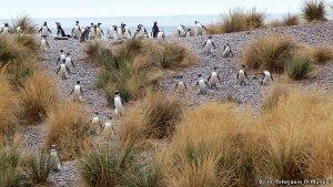 Cabo Dos Bahías